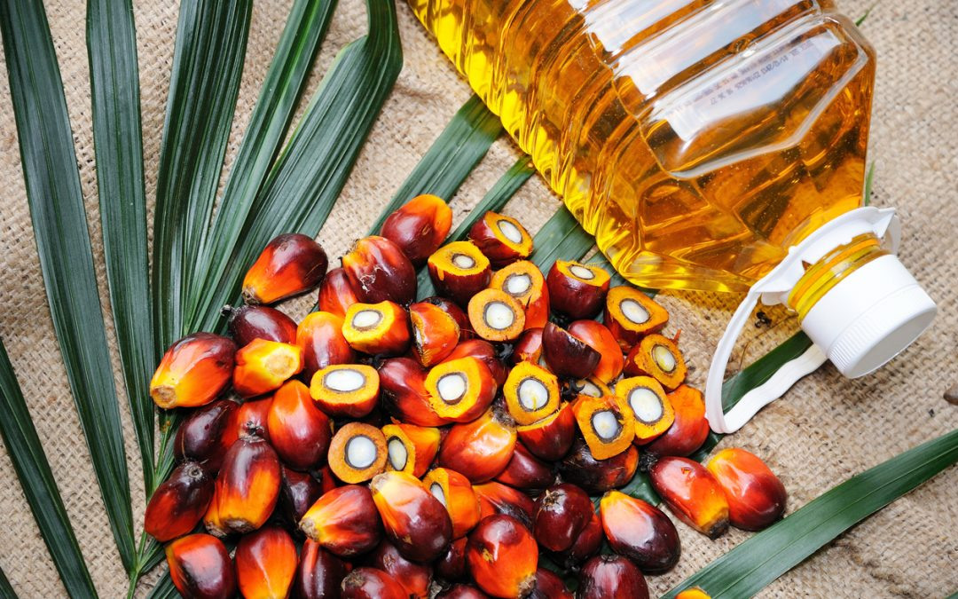 Let's Talk About Palm Oil