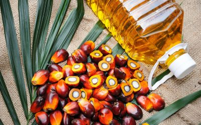 Let's Talk About Palm Oil