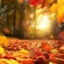 Tips for a Fabulous Fall