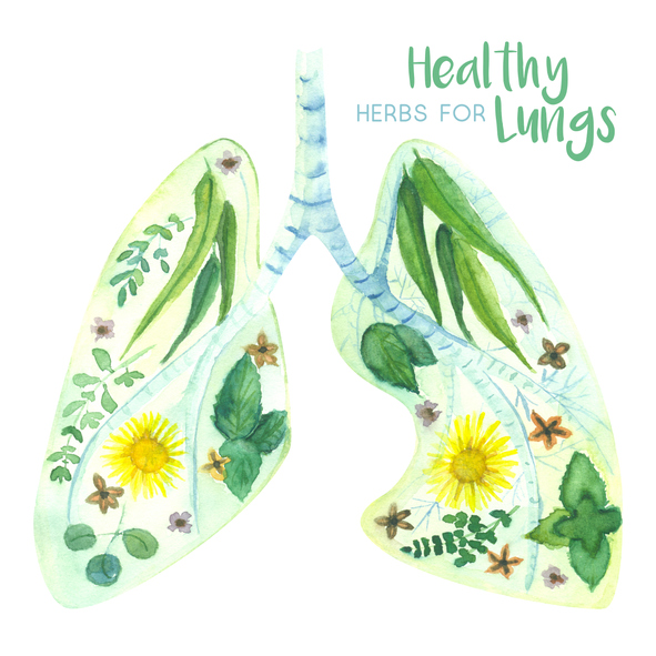Herbs for Lung Health After Smog